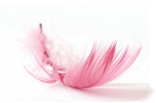fun toy feather